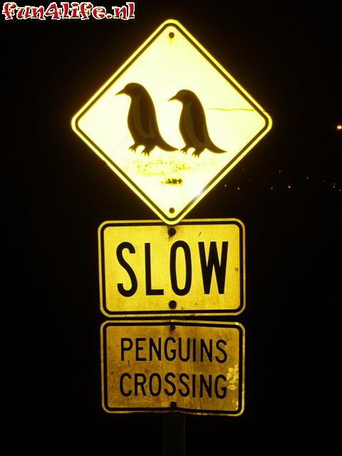 Slow pinguins crossing